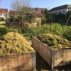 Un mulch fait de mousse récupérée après scarification de la pelouse. On fait avec ce que l'on trouve sur place!